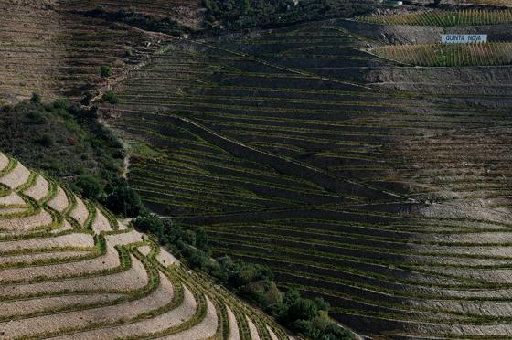 A propriedade tem 85 hectares de vinhedos que se estendem por 1,5 km na margem direita do Douro