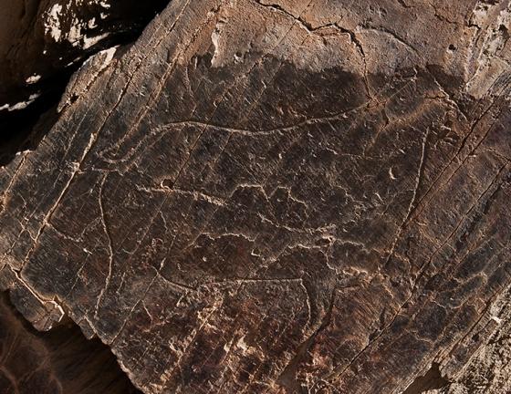A cabra da Rocha 5 de Penascosa: uma das espécies mais retratadas pelos habitantes pré-históricos do Côa