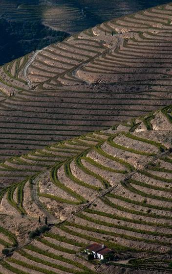 Encostas da margem esquerda do Douro, entre São João da Pesqueira e Pinhão