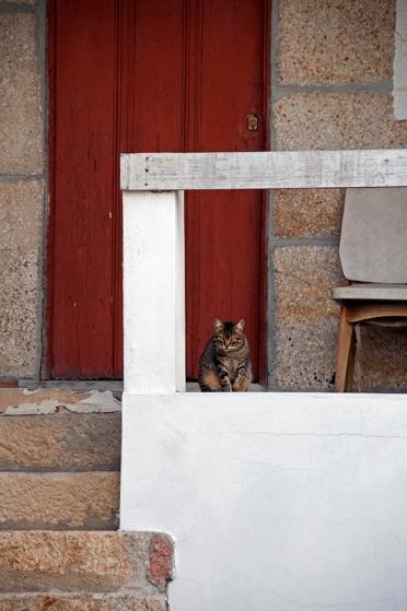 O gato desconfiado de Favaios, onde tomei e comprei moscatel pela primeira vez