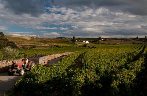 Vinhas de uva moscatel em Favaios, no coração do Alto Douro Vinhateiro