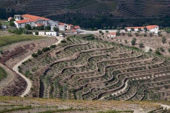 Socalcos: sustentados por muros de pedra, eles formam um das mais dramáticas paisagens vínicas do mundo