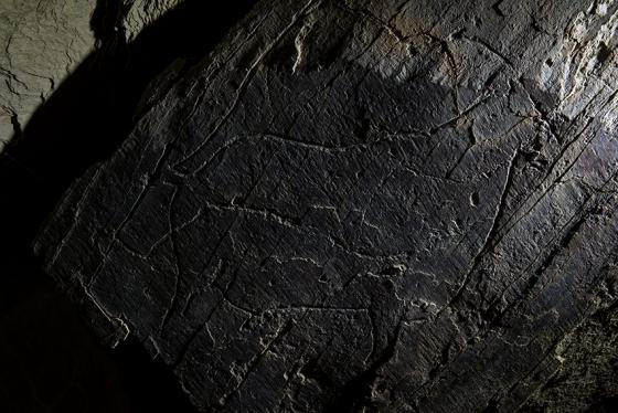 Detalhe da Rocha 5: outro macho de cabra-montês, uma das espécies mais comuns do Côa paleolítico