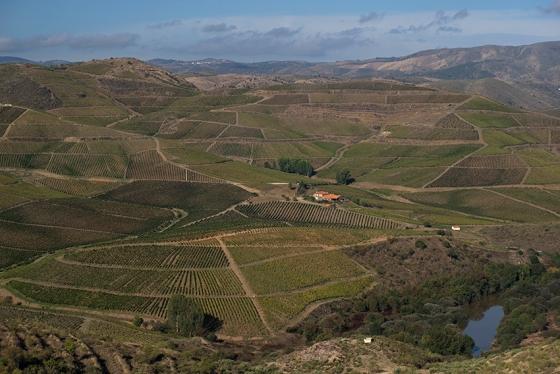 Quinta de Ervamoira: 150 hectares de vinhas com idade média de 30 anos