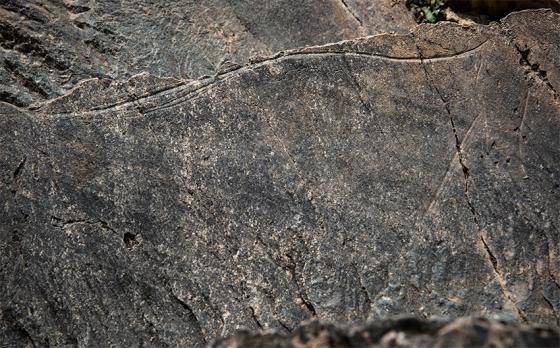 O cavalo da rocha 24, que está de perfil, mas encara o observador de frente (algo nada usual entre as gravuras do Côa