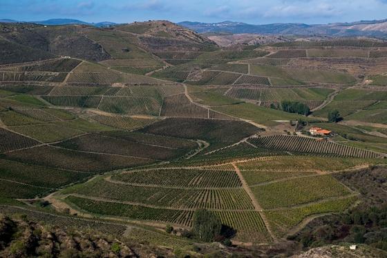 A propriedade vista da estradinha de terra que leva ao sítio arqueológico de Penascosa, na margem oposta do Côa