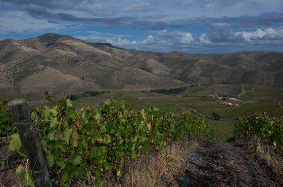 Vinhas ao alto e plantadas por talhões: primeira quinta do Douro com essas características