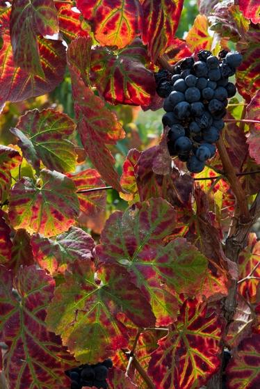 O outono no Douro Superior: uma paleta de ocres e vermelhos