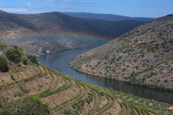 De novo, o visual do Douro junto à desembocadura do Côa: sequ^ncia interminável de quintas