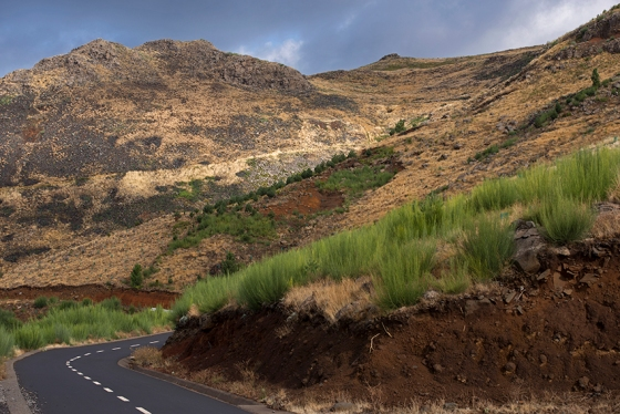 A estrada florestal que liga a Eira do Serrado ao Pico do Areeiro