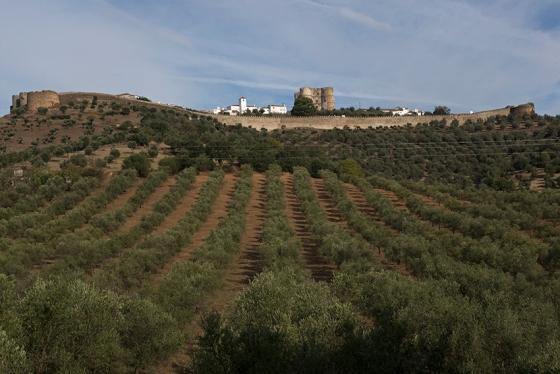 Evoramonte vista à distância, cercada de oliveiras