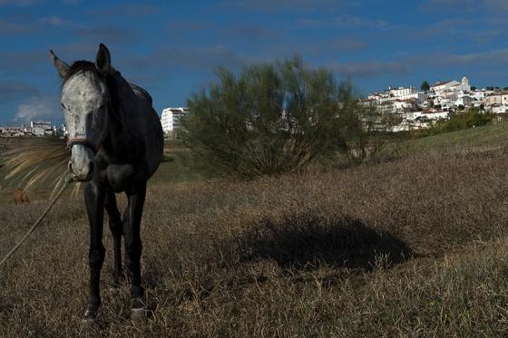 Parada no caminho para as Portas de Olivença para clicar um cavalo com Elvas ao fundo