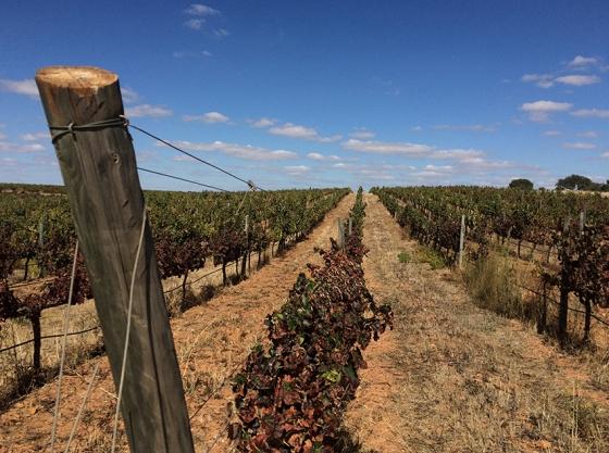 A vinhas da encantadora Herdade do Esporão, em Reguengos de Monsaraz