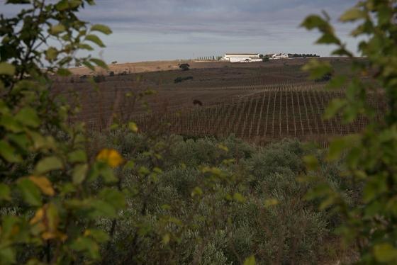 Visual de beira de estrada entre Elvas e Campo Maior, no Alto Alentejo