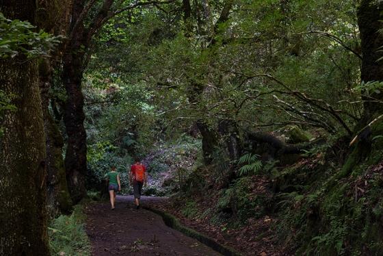 Trecho inicial da Vereda dos Balcões, no Ribeiro Frio, um dos percursos pedestres mais populares da Ilha da Madeira
