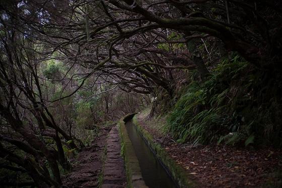 Ilha da Madeira, 2015