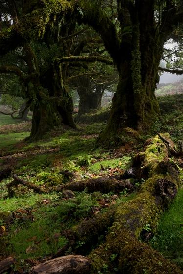 Floresta Laurissilva, Ilha da Madeira, 2015